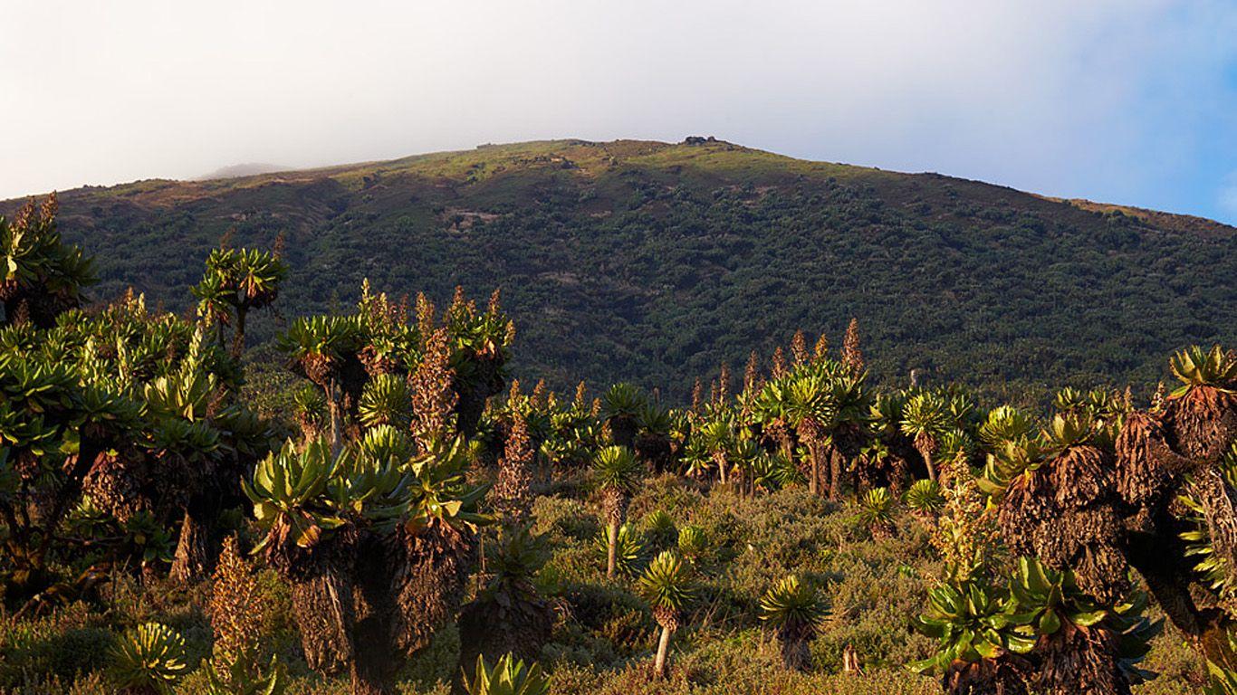 Вулкан Карисимби вблизи
